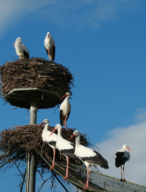 Storcksflat