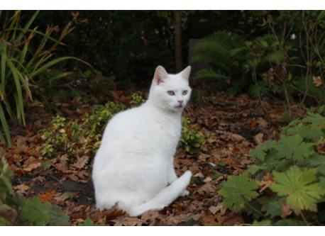 Cat Minoes
