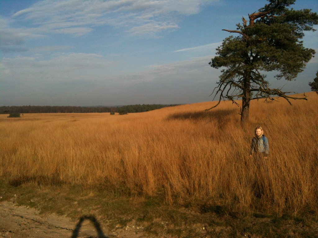 The Veluwe. Great area for long hikes....