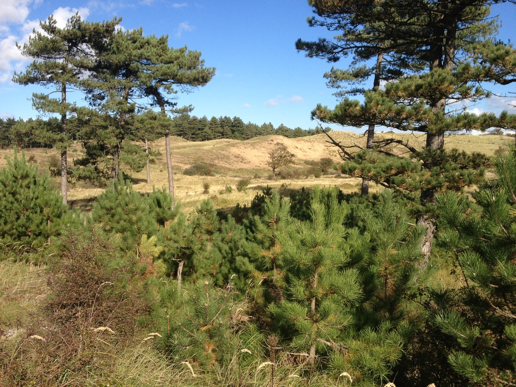 The dunes, National Parc Kennemer Duinen