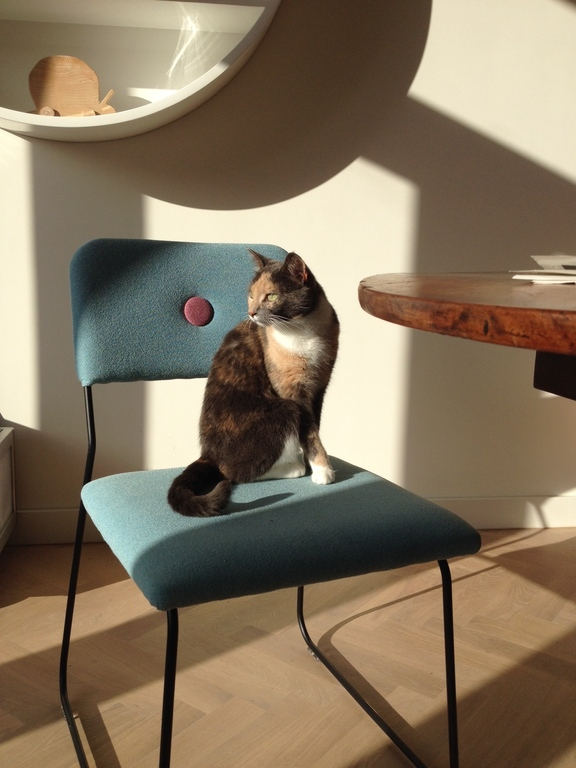 Our cat Panda enjoying the sun in our living room.