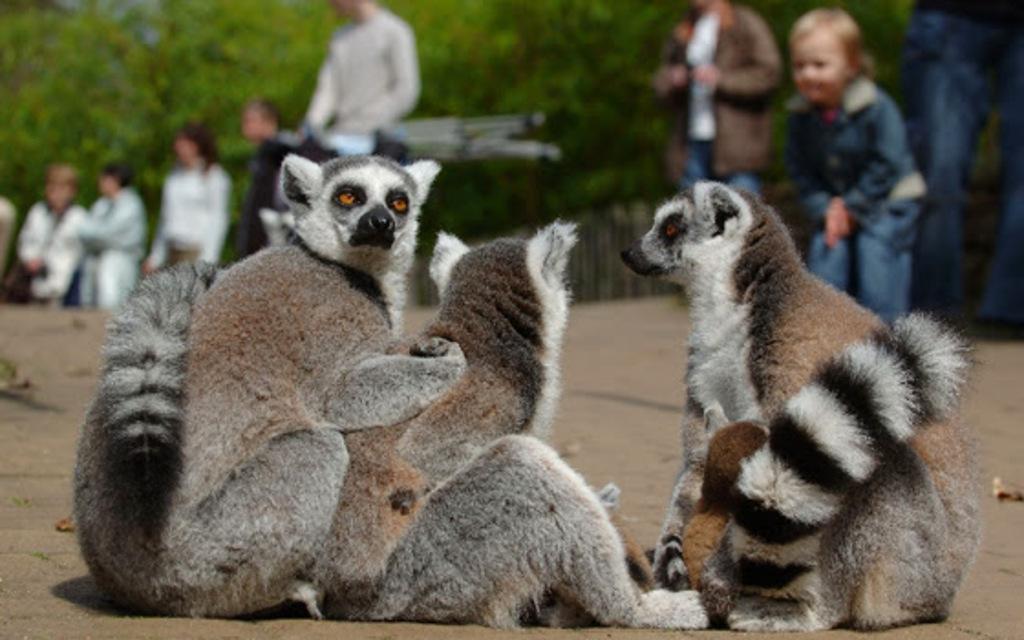 Monkey zoo in Apeldoorn