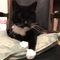 cat Moois