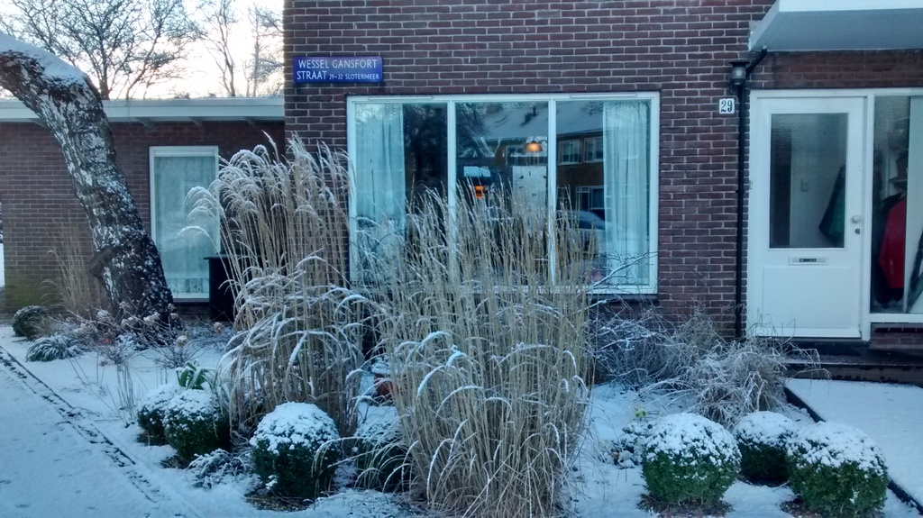 Front garden in winter