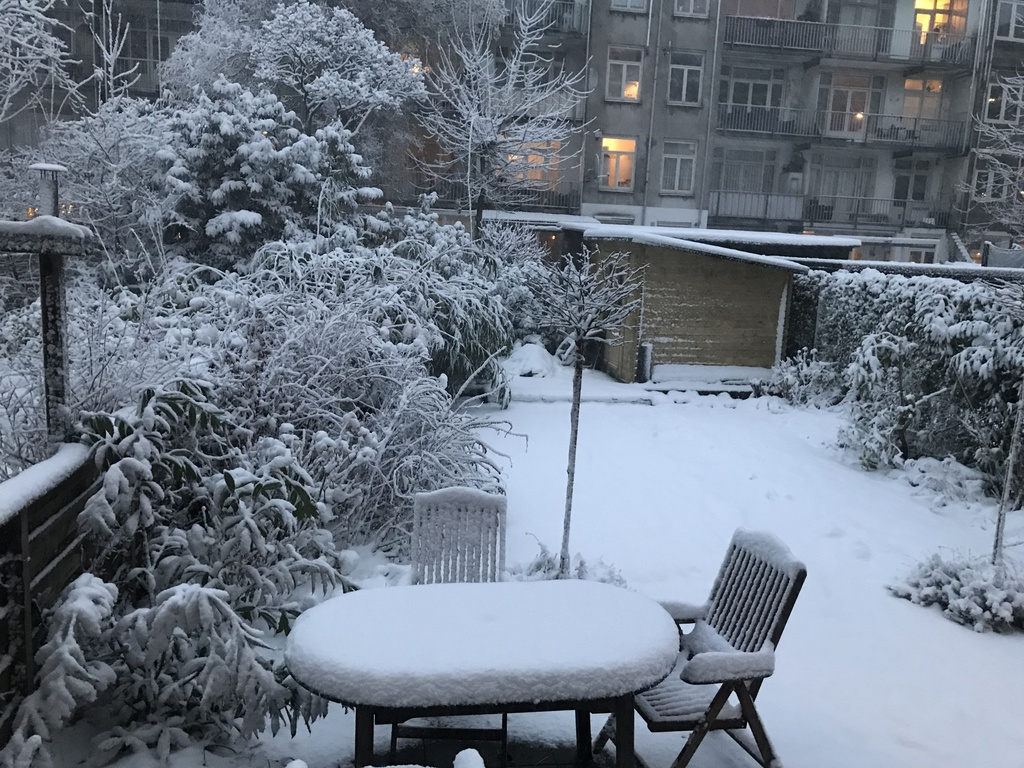 Garden winter