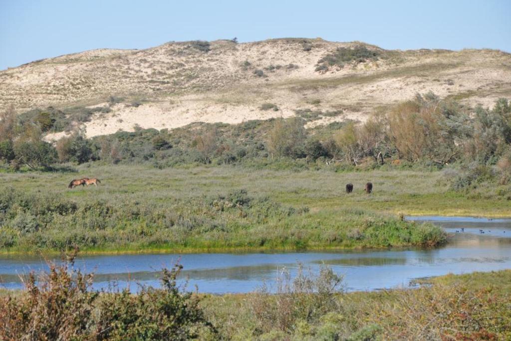 Sand dunes, a unique coastal ecosystem in the 'Noordhollands Duinreservaat'.
