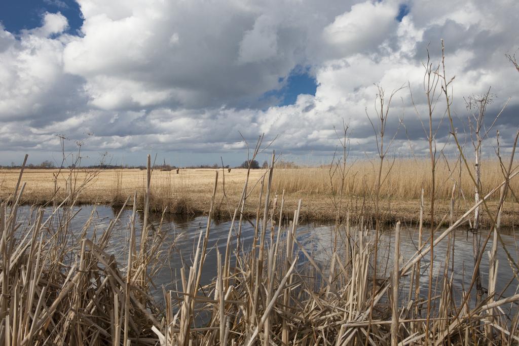 natural reserve area in Nieuwkoop