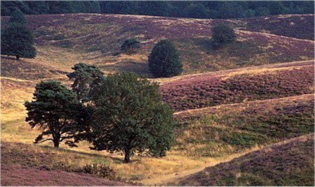 """'Posbank"""" near Arnhem"""