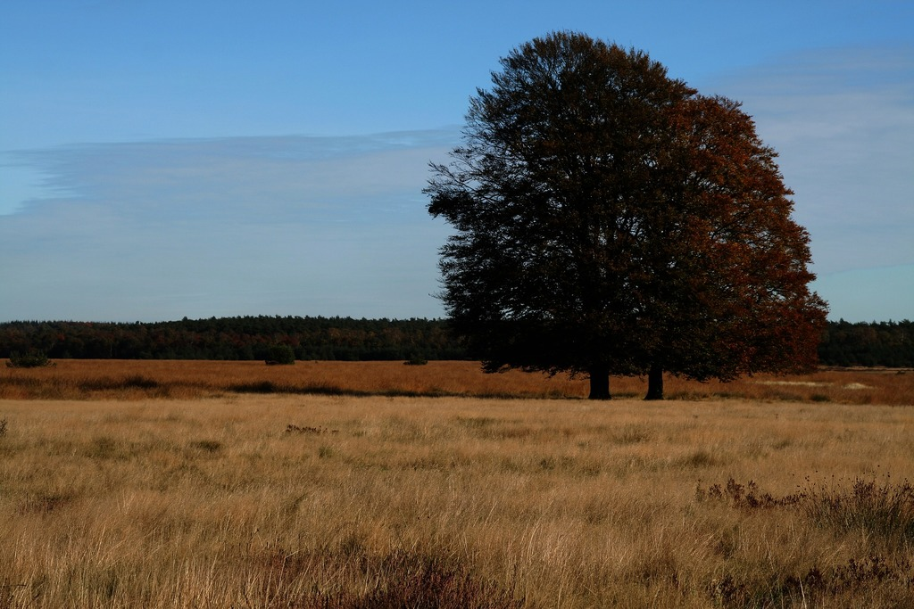 "Nature-parc ""De Hoge Veluwe"" 40 km away"