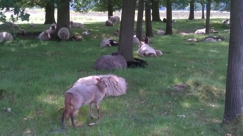 meeting sheep while cycling