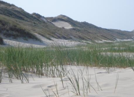 View of the dunes from the seaside
