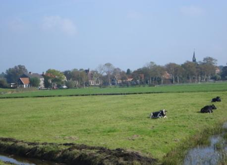 View of a polder near Alkmaar
