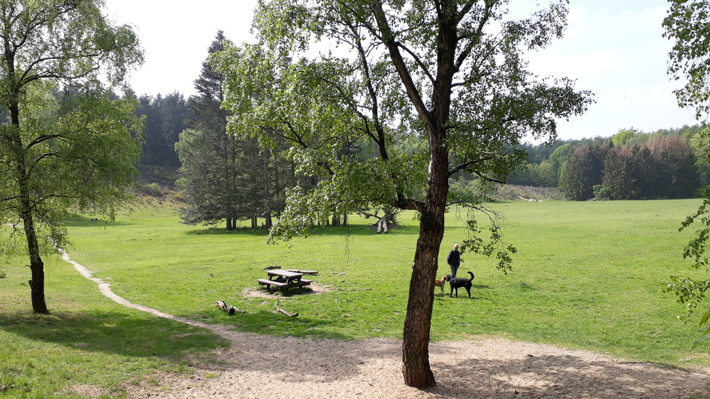 play and picknick ground in the forest