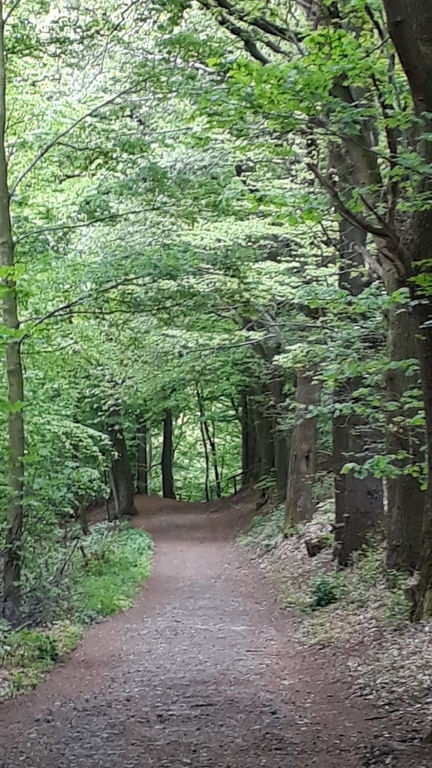Old roman road through the forest.