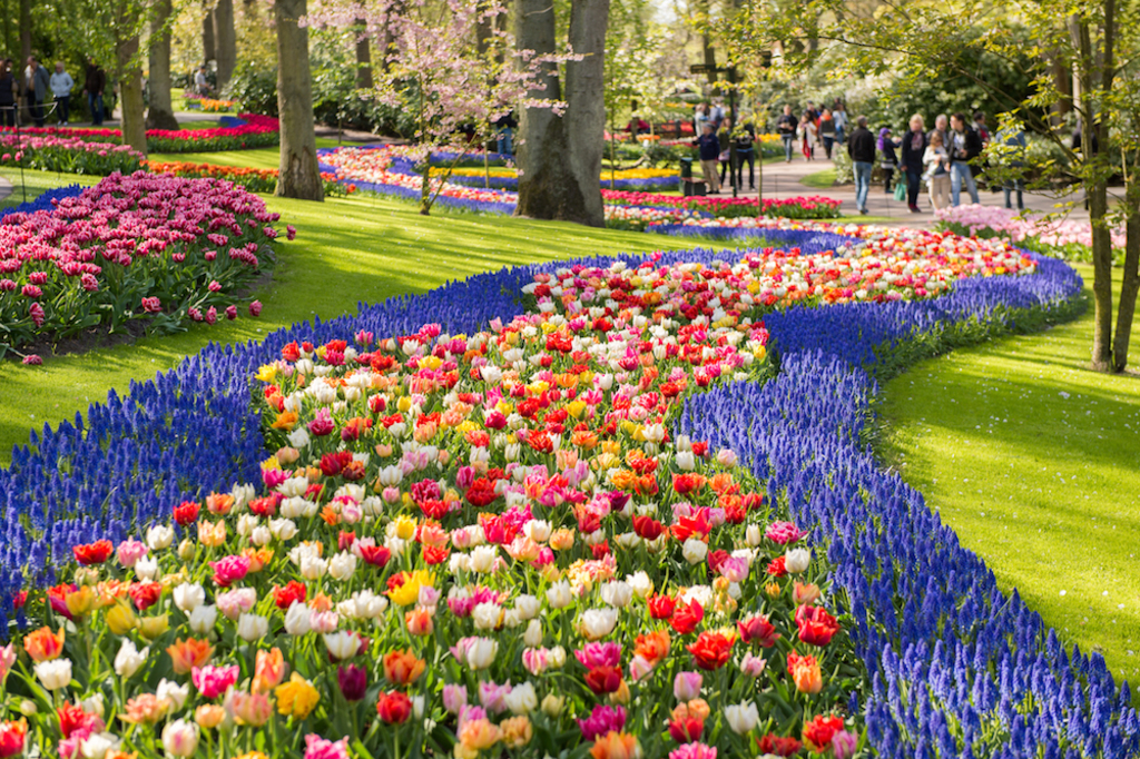 Keukenhof is spectacular with the variety of blooming bulbs in spring, only 10 min by car.