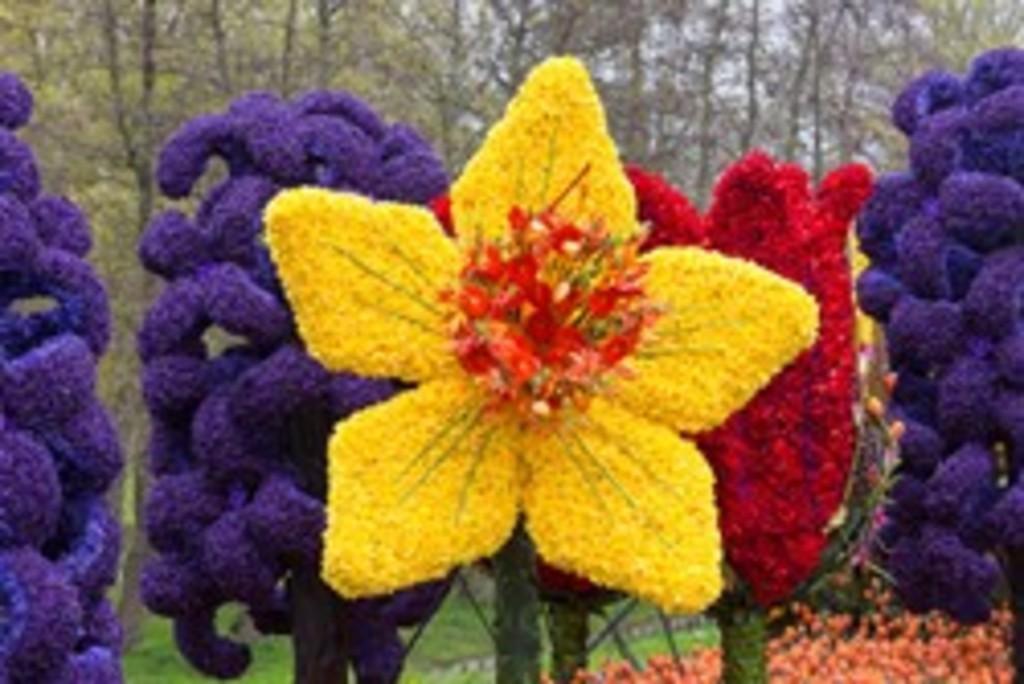 The flowerparade
