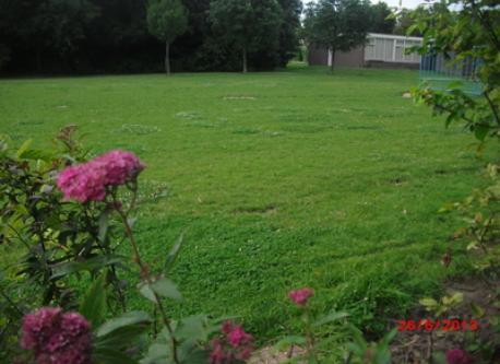 Behind our garden