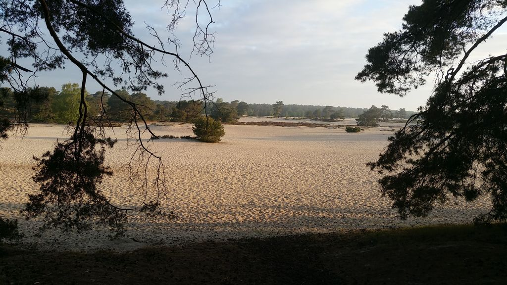De Soesterduinen: a large sandy area, ideal playing environment for (the smaller) kids)