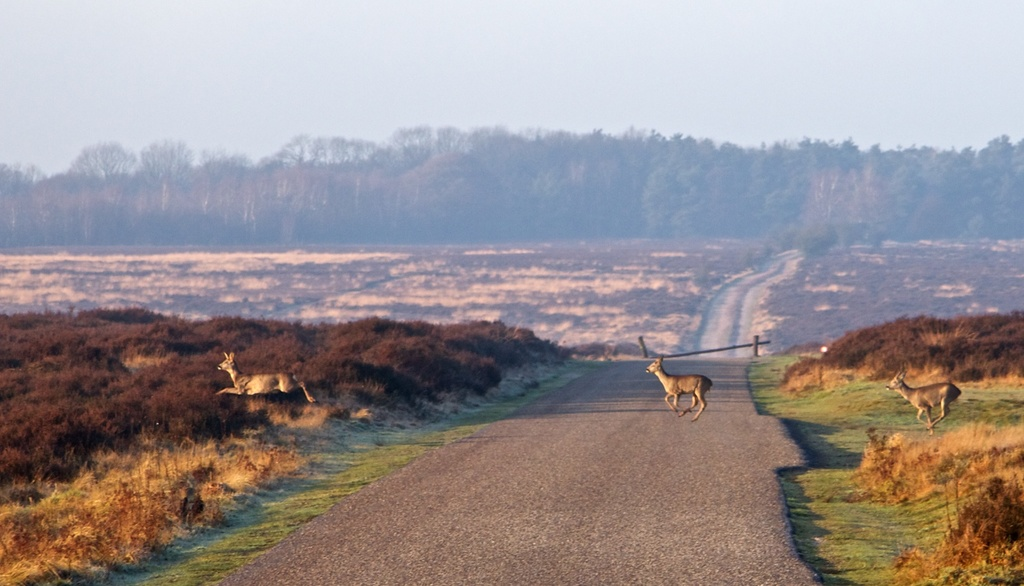 Borrow a white bike (or walk) and enjoy 40 km of cycle paths in National Park 'de Hoge Veluwe'. You might even spot wildlife!