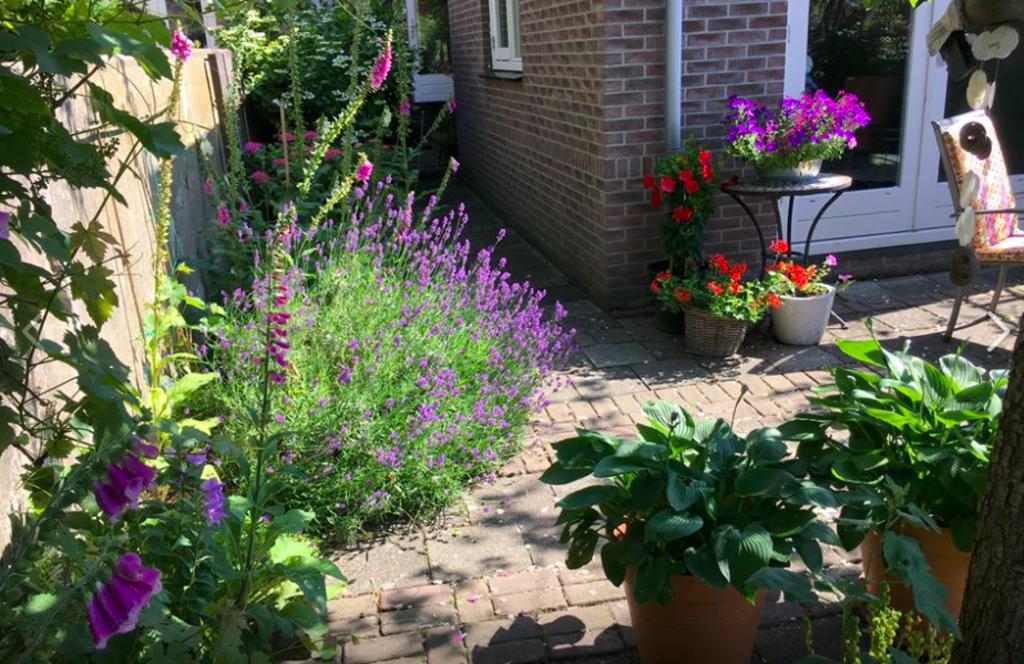 Tuin in juni