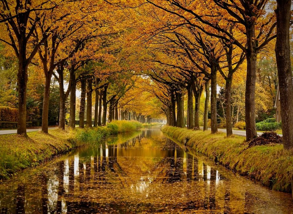 Herfst langs de Compagnonsvaart
