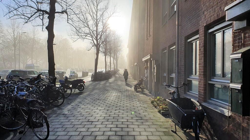morning fog in our street