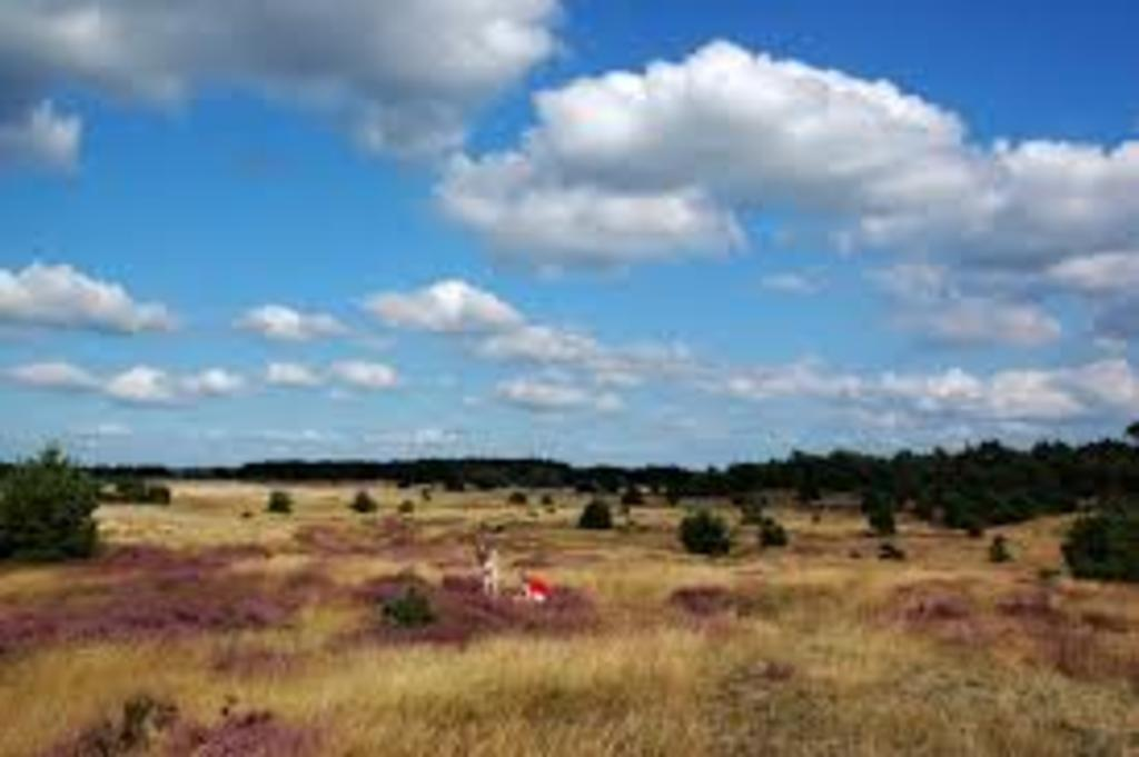 "National park ""Hoge Veluwe"". Ca. 30 min by car."