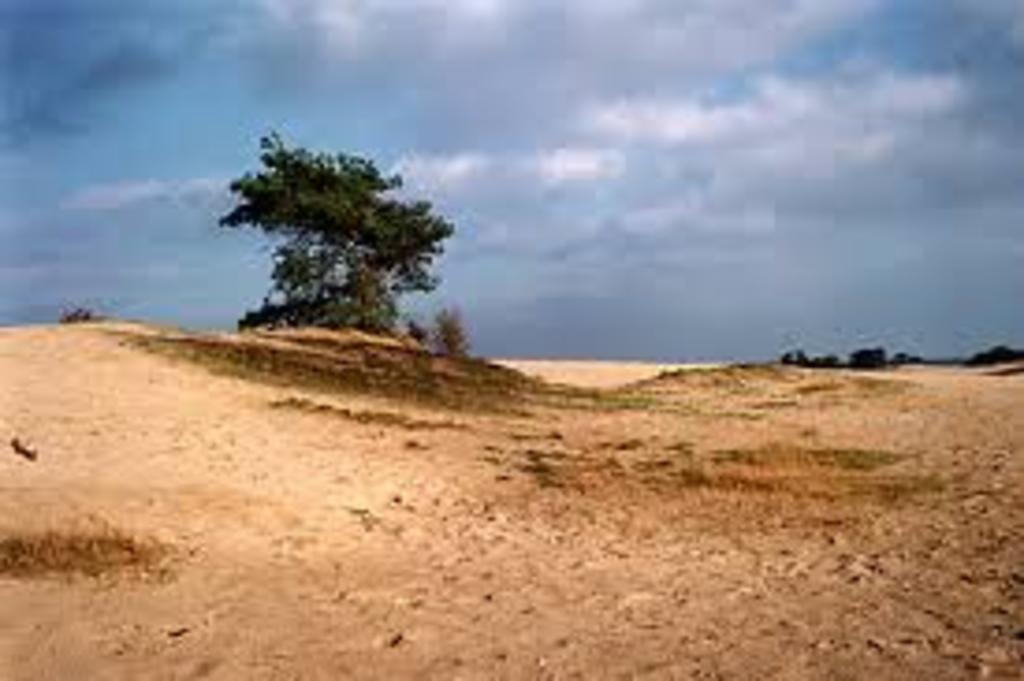 """Sahara Desert of Europe """"Kootwijkerzand"""""""