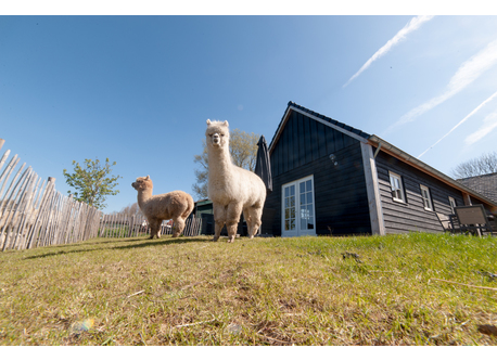 Our guesthouse with alpaca's at the front