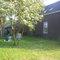 backyarden