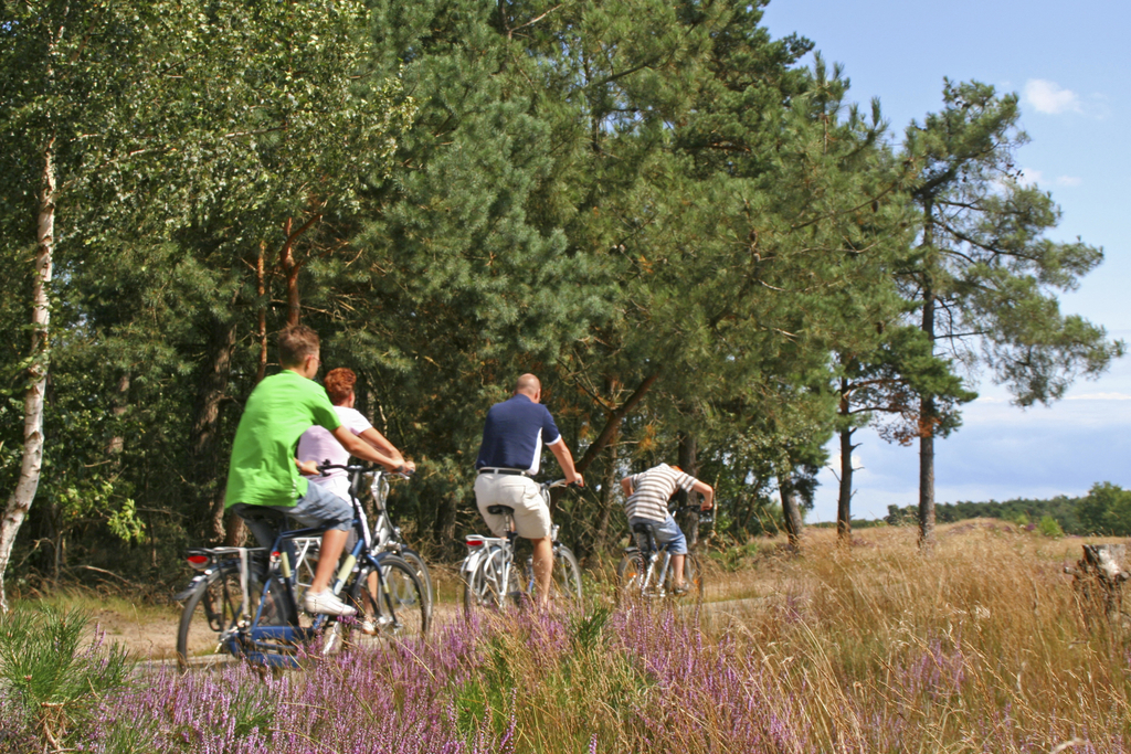 Lots of cycle tours. Here on 'De Hoge Veluwe'.