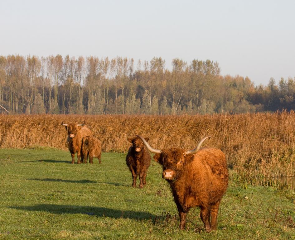 Lauwersmeer area
