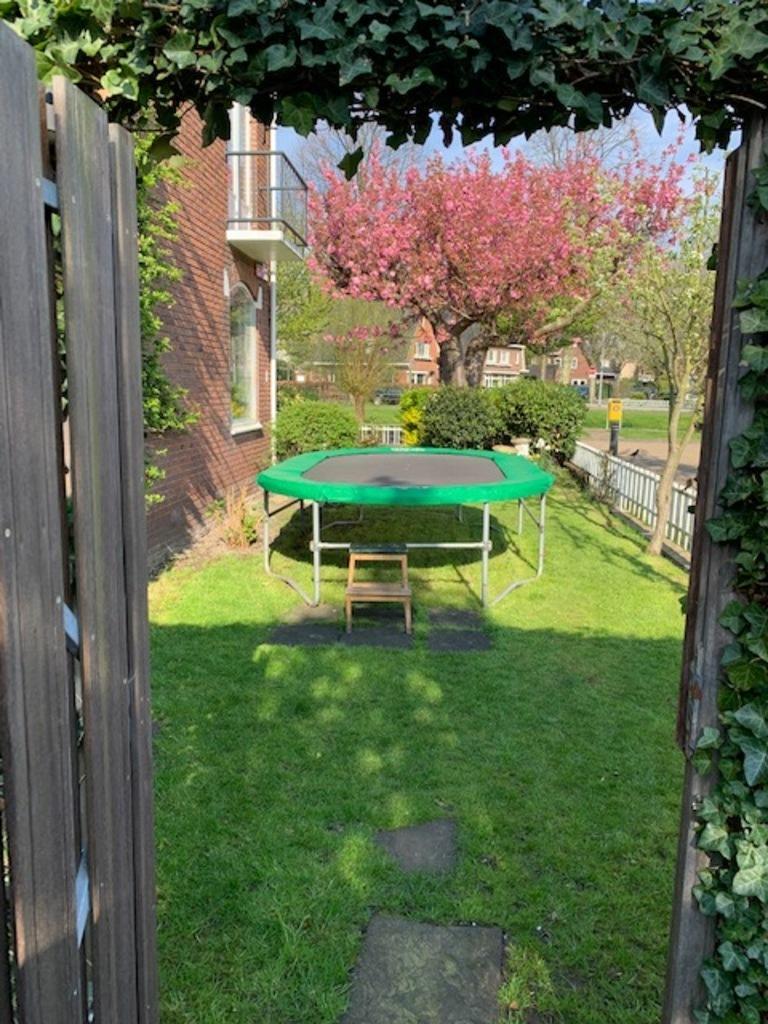 Side garden seen from backyard