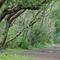 Forest Castricum 3 km