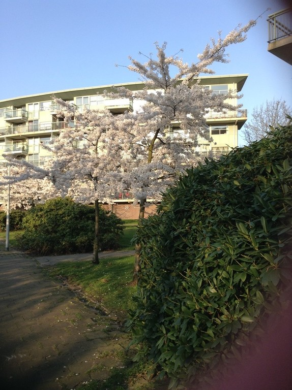 The appartment in the spring