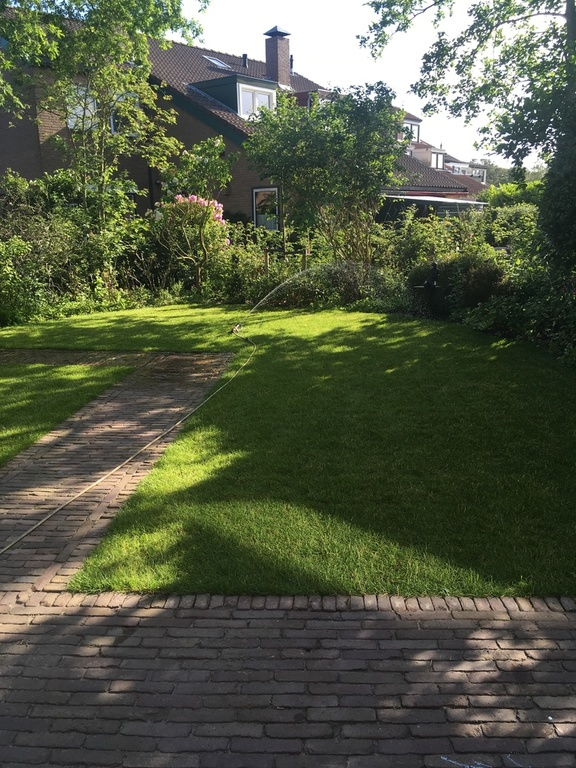Garden, summer evening