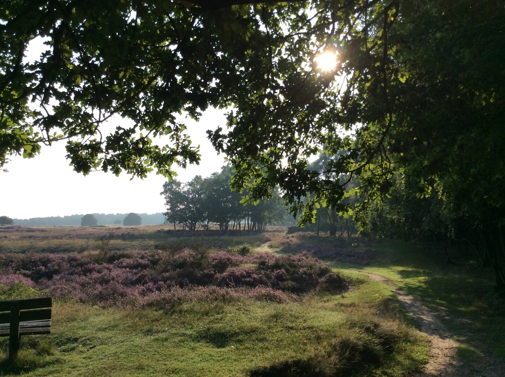 forest and fields, in august they become pink/purple