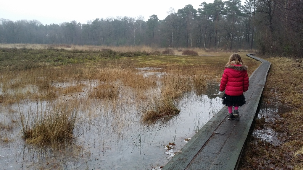 Walking in a nature reserve in winter, 10 min by car