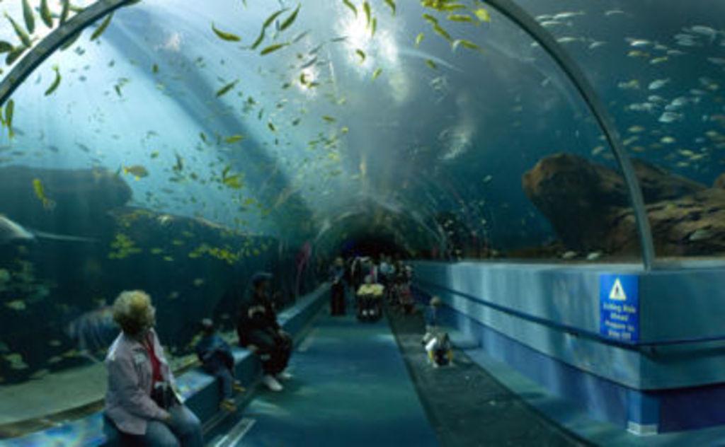 Aquarium in award winning Zoo in Arnhem (40 min.)
