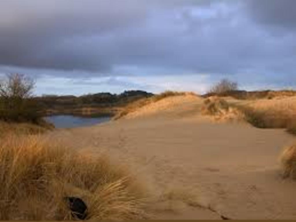 "Protected Dunes in National Reservation ""Kennemer Duinen"", beautiful to hike, run and/or cycle."