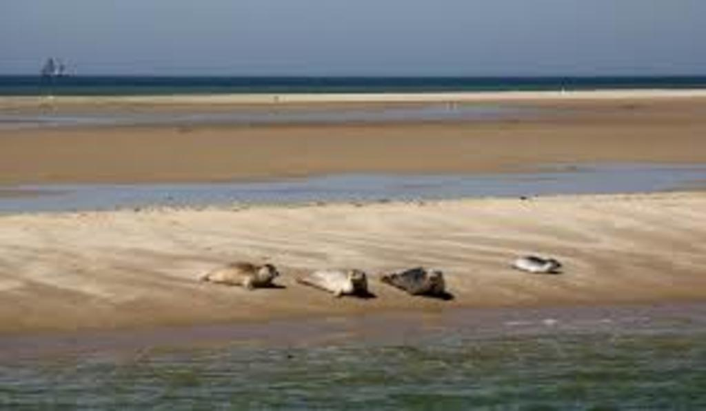 the Wadden Sea is a tidal sea. Go for a nice seal tour.