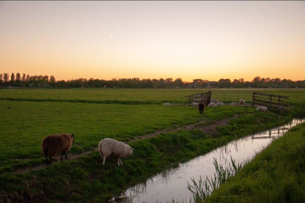 Polder of Castricum, here you can cycle beautifull routes