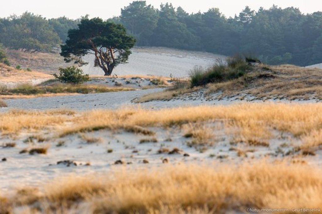 """National Park """"de Loonse en Drunense duinen"""". Beautiful nature only 15 min away;"""