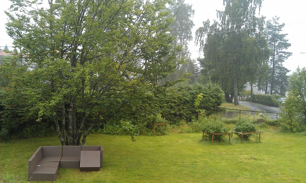 Rainy summer day in our yard