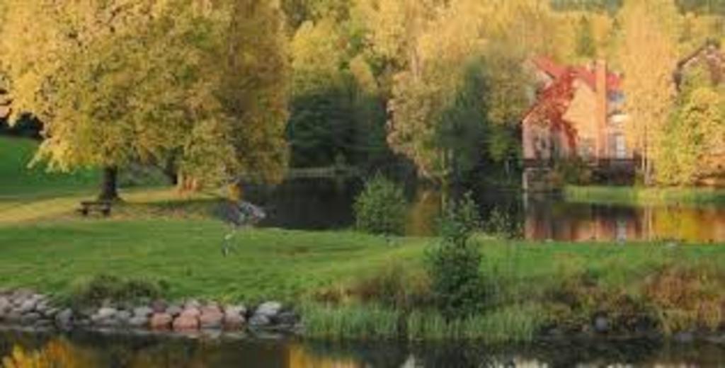 Local fall scenery - 15 mins walk