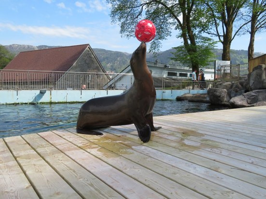 The Bergen aquarium