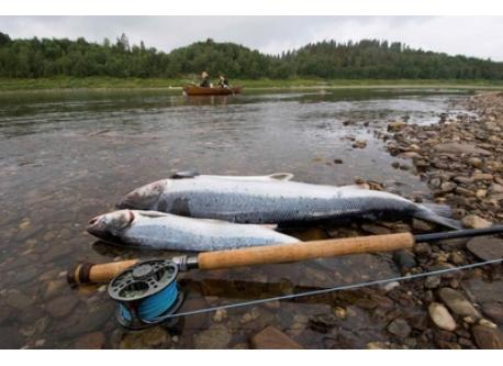 One of the best rivers for Salmon