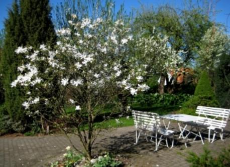 Garden during springV