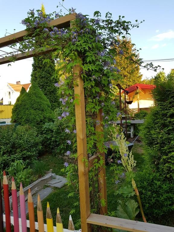 Back side of garden