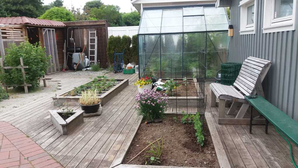 Backyard garden.